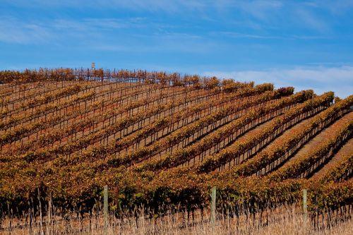 sonomos vynuogynas,vynuogynas,Sonoma,Kalifornija