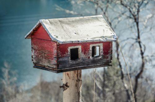 tiektuvas, namas, paukštis, maitinti, medis, maistas, žiema, laukinė gamta, sezonas, medinis, mediena, birdhouse, statyba, namai, amatų, gamta, apdaila, kaimiškas, vintage, derliaus paukščių tiektuvas