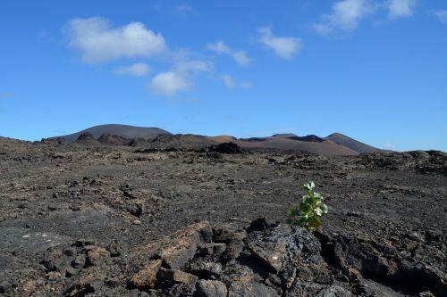 vulkanas,augalas,gamta,kraštovaizdis,dangus,lava akmuo,lava,vulkaninis,nauja pradžia,Kanarų salos,nusmukęs