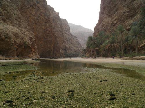 Wadi, Oman, Gamta, Egzotiškas, Atogrąžų, Palmės, Kalnai, Tvenkinys, Vanduo, Vaizdas, Kraštovaizdis