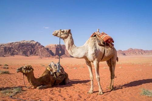 Kupranugaris, Wadi Rum, Dykuma, Kelionė, Jordan, Smėlis, Artimieji Rytai, Paskirties Vietos, Šiluma, Vaizdingos Scenos
