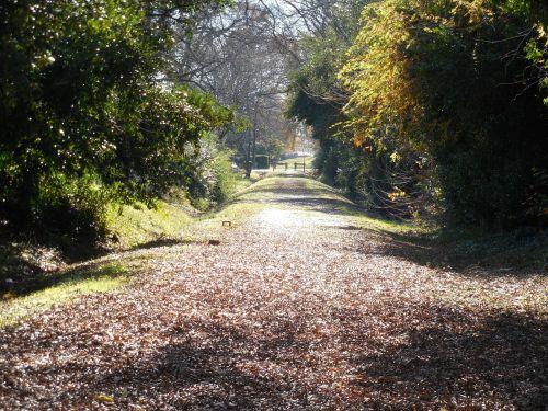pėsčiųjų takas,dviračių takas,kelias,takas,dviratis,dviratis,vaikščioti,kelias,lauke,takas,gamta,kelias,vaikščioti,trasa,ciklą,linija,juostos,maršrutas,dviračiu,parkas,žygiai,kelias,kraštovaizdis,medis,kelyje,poilsis,miškas,pratimas,lapai,ilgai,siaura,paslėpta,laisvalaikis,gyvenimo būdas,lauke