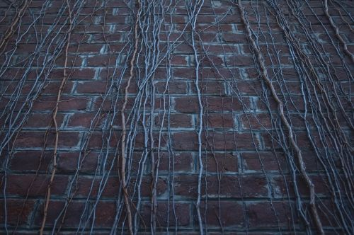 siena,negyvoji siena,negyvi augalai,hdr,senas,vintage,gamta,tamsi,abstraktus,menas,senoji siena,plytų siena