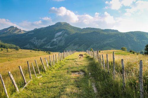 vaiduoklis,žygiai,kalnai,kraštovaizdis,kelias,šuo,nuotykis,vasara,gamta,lauke,laisvė,alpinizmas,kelionė,gyvenimo būdas,Bosnija,Europa,saulės šviesa