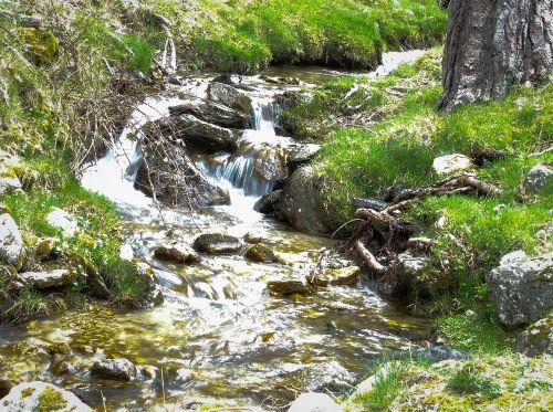 vanduo,miškas,judėjimas,gamta,pabrėžia,upė,natūralus,krioklys,natūralus vanduo,kalnas,dabartinis,miškai