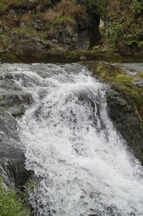 krioklys,vanduo,putos,upė,natūralus spektaklis,Uždaryti