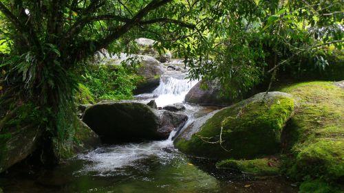 krioklys,augmenija,Serra,tropinė augmenija,Brazilija,Mato,Atlanto miškas