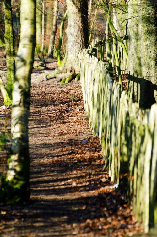 kelias, kelionė, kelionė, kelionė, kelionė, kelias, gamta, sezonai, žiema, maršrutas, fonas, kryptis, lauke, lauke, šviežias, medis, medžiai, kraštovaizdis, kelias