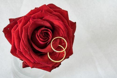 Vestuviniai žiedai,rožė,žiedai,auksiniai žiedai,rožė guli,bendravimas,auksiniai žiedai,meilė,kartu,ryšys,priesaika,Visą laiką,prijungtas,vestuvių dieną,ilgiau dėvimi žiedai,įbrėžimai ant žiedų,kasdieniniai žiedų pėdsakai,amžinai,papuošalai