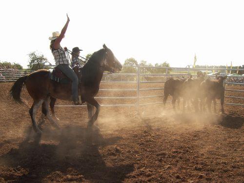 Vakarų jojimo,važiuoti,arklys,jodinėjimas,kaubojus,Vakarų,karvės