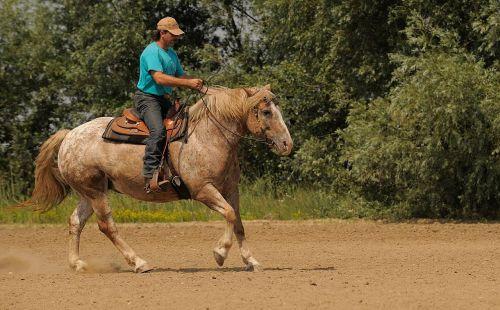 Vakarų jojimo,važiuoti,kaubojus,žirgais,jodinėjimas,arklys,jodinėjimas,ranča,jodinėjimas