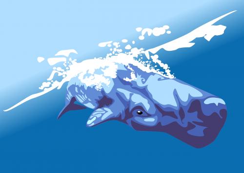 banginis,puodinis banginis,cachalotas,banginis sperma,žinduolis,gyvūnas,nardymas,gamta,vandenynas,povandeninis,žuvis,milžiniškas,milžinas,Mėlynasis banginis,Jūros gyvenimas,jūrų,jūrų,nemokama vektorinė grafika