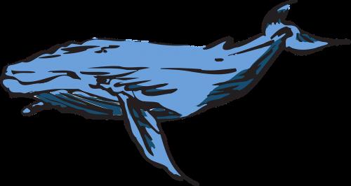 banginis,Mėlynasis banginis,kuprotasis banginis,leviatanas,žinduolis,vandenyno gyvenimas,žuvis,nemokama vektorinė grafika
