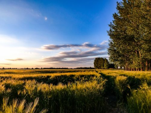 rugių laukas,dangus,kvieciai,kraštovaizdis,laukas,sėjai,grūdai,saulės šviesa,kukurūzų laukas,gamta,lygumos,kaimo kraštovaizdis,puikūs planai