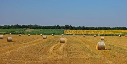 rugių laukas,šiaudų ryšulys,Žemdirbystė,rugių laukas,grūdai,kukurūzų laukas,kraštovaizdis,ritinys,dirvožemis