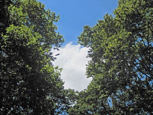 medžiai, žalias, didelis, atotrūkis, dangus, debesis, balta, baltas debesis tarp žaliųjų medžių