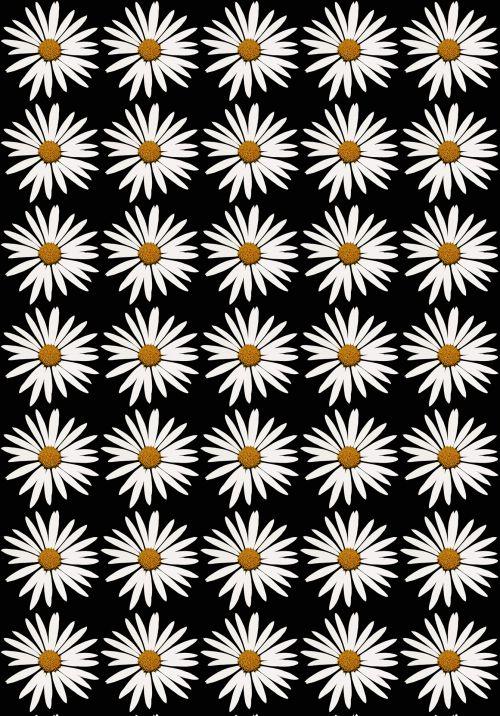 Daisy, balta, pakartoti, tapetai, fonas, juoda, balta daisy ant juodo fono