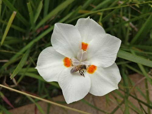 Balta gėlė, žalias, pobūdį, Sodas, pavasaris, subtilus, subtilus gėlės, ramybė, Grynumas, sėklos, lapai