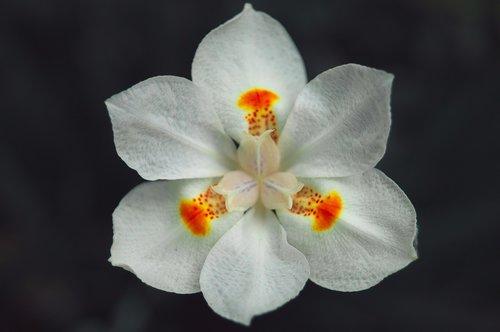 Balta gėlė, Sodas, metodas, minimalizmas, minimalistinis, kuokelių, baltos spalvos, pobūdį, pavasaris, gėlė, baltos gėlės, gėlės, žydėjimo, balta spalva, augalų, žiedlapiai, baltos žiedlapių, Grožio, Žiedlapis, žiedlapiais baltos spalvos, Spring Garden, centras, spalvos