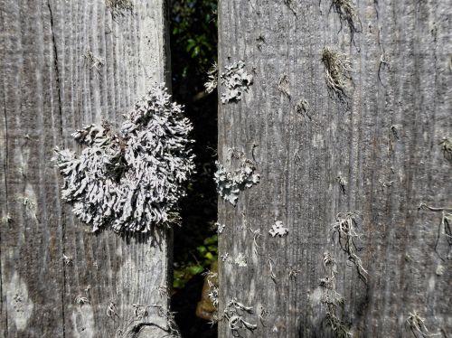 balta, samanos, fonas, tekstūra, vienspalvis, spalva, mediena, augalas, gamta, natūralus, balta sode auga