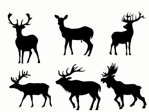 laukiniai, gyvūnai, juoda, siluetas, balta, fonas, miškas, elnias, briedis, antlers, Laukiniai gyvūnai