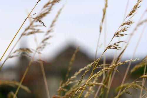 laukinės žolelės,gamta,žolelės,laukinis augalas,pavasaris,france