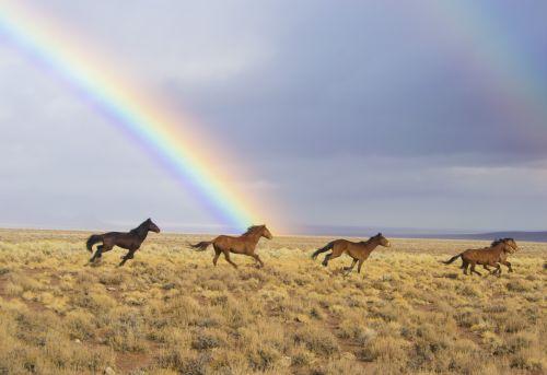 arkliai, laukiniai, laukiniai, vaivorykštė, paleistas, prairie, viešasis & nbsp, domenas, tapetai, fonas, blm, Nevada, usa, bėgimas, Laisvas, laisvė, arkliai, kraštovaizdis, lauke, Laukiniai arkliai