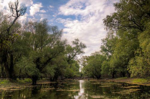 laukiniai, gamta, flora, ežeras, Danube, delta, augalai, medžiai, žalias, vasara, kelionė, natūralus, bio, miškas, kelionė, laukinis kelionė