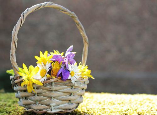 laukinės vasaros spalvos,laukinės gėlės,Daisy,violetinė,balta,geltona,violetinė,gėlės,krepšelis,gamta,natūralus augalas,gamtos gėlės,samanos,pavasaris,flora,romantiškas,atvirukas,atvirukas,gėlių sveikinimas,žemėlapis,pasveikinimas,laukinės gėlės krepšyje,saulės šviesa,saulėtas,romantika
