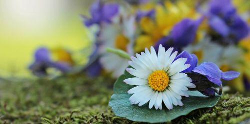 laukinės vasaros spalvos,laukinės gėlės,Daisy,violetinė,balta,geltona,violetinė,gėlės,gamta,natūralus augalas,gamtos gėlės,samanos,pavasaris,flora,romantiškas,atvirukas,atvirukas,gėlių sveikinimas,žemėlapis,pasveikinimas,laukinės gėlės krepšyje,saulės šviesa,saulėtas,romantika,romanai ant lapo,spalvinga