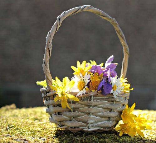 laukinės vasaros spalvos,laukinės gėlės,Daisy,violetinė,balta,geltona,violetinė,gėlės,krepšelis,gamta,natūralus augalas,gamtos gėlės,samanos,pavasaris,flora,romantiškas,atvirukas,atvirukas,gėlių sveikinimas,žemėlapis,pasveikinimas,laukinės gėlės krepšyje,saulės šviesa,saulėtas,romantika,spalvinga,nuotaika
