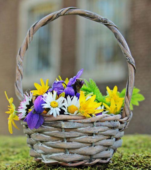 laukinės vasaros spalvos,laukinės gėlės,Daisy,violetinė,balta,geltona,violetinė,gėlės,krepšelis,gamta,natūralus augalas,gamtos gėlės,samanos,pavasaris,flora,romantiškas,atvirukas,atvirukas,gėlių sveikinimas,žemėlapis,pasveikinimas,laukinės gėlės krepšyje,saulės šviesa,saulėtas,romantika,spalvinga,langas,spalva