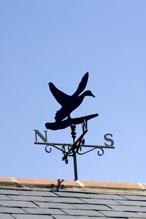 vėjo & nbsp, indikatorius, oras & nbsp, vėjui, vėjas, indikatorius, antis, paukštis, vine, oras, Šiaurė, į pietus, rytus, vakaruose, žymeklis, mėlynas, dangus, stogas, plytelės, vaizdas, nuotrauka, Laisvas, viešasis & nbsp, domenas, skraidantis, sparnai, vėjo indikatorius