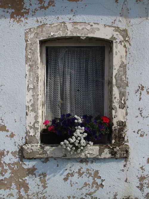 langas,gėlė,senas langas,senas,fasadas,senas pastatas,plikas,sergantis,senas namas,skilimas