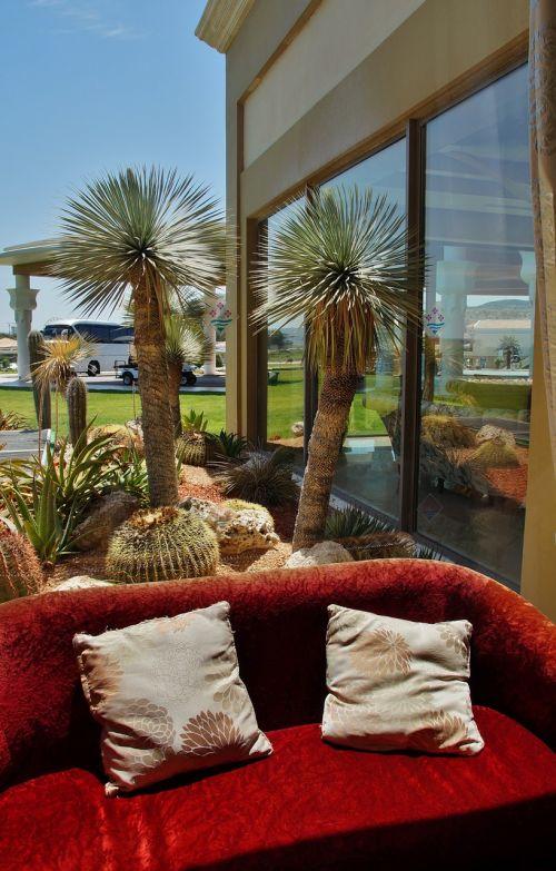 langas,vaizdas iš lango,sofa,delnas,kaktusas