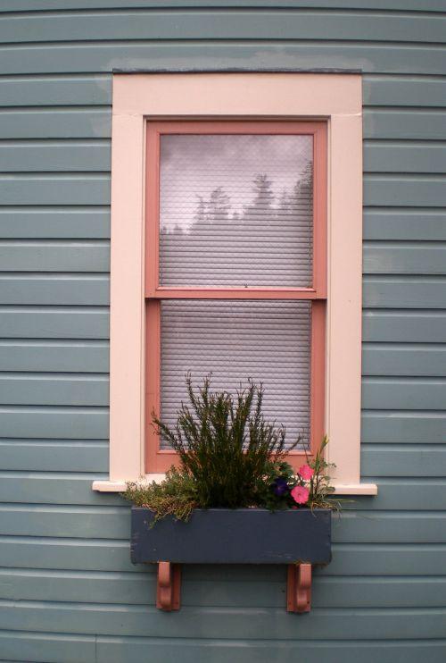 langas, dėžė, langų dėžė, gėlė, gėlių dėžė, lango dėžutė