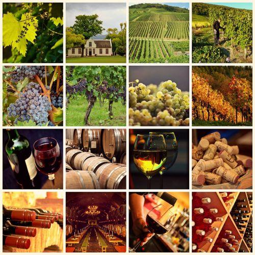 vynas,vynuogių auginimas,vynuogynai,vynuogės,vynuogynas,vyno taurė,vintage,rūsys,gerti,alkoholis,vyno derlius,ruduo,vyno degustacija,vyno laikymas,vyno gamintojas,raudonas vynas,baltas vynas,medinės statinės,vyno statinės,vyno fabrikas,maistas,Žemdirbystė,pietų Afrika,Mosel,vyno lapai,vynmedis
