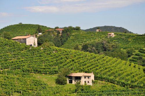 vynas,vyno fabrikas,italy,vynuogynas,prosecco,lauke,vynuogių,Šalis,laukas,Žemdirbystė,vynmedis,žalias,kraštovaizdis,gamta,ūkis