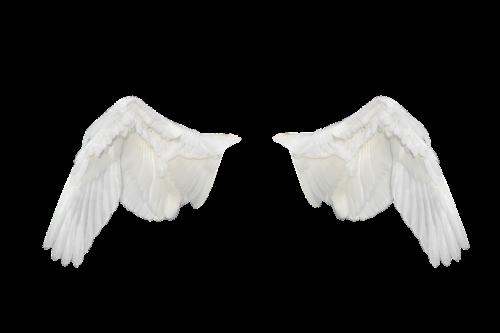 sparnai,sparnai ave,skrydis,skristi,balti sparnai,png,laisvė
