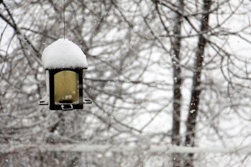 žiema,manger,pašarų paukščiai,paukštis,sniegas,žiemos peizažas,sodas,vakuumas,snieguotos šakos,šaltas,gyvūnai,balta,dribsniai,Kanada