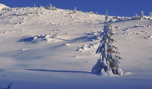 žiema,sniegas,medis,sniego danga medžiai,Eglė,Biel,švieži sniegas,apšvietimas,pusė,šaltis,sąskaita faktūra,plastiškumas,šešėliai,šešėliai ant sniego,švieži nuosėdos,šoninis apšvietimas,kalnai,snieguotas kalnus,kraštovaizdis,sniego dengtos eglės