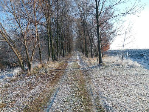 žiema,žiemą,toli,žygiai,medžiai,gruodžio mėn .,žieminiai krūmai,šaltis,šaltas,krūmai,krūmai,auskaras,ledas,sušaldyta