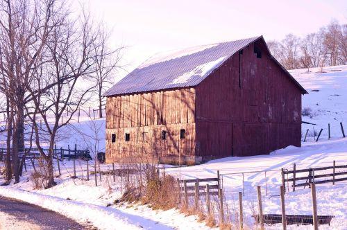 žiema,sniegas,šaltas,kraštovaizdis,gruodžio mėn .,ledinis,raudonasis svirnas,medžiai