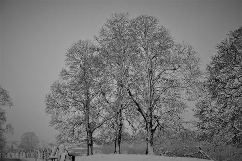 žiema,Saunus,kaštonas