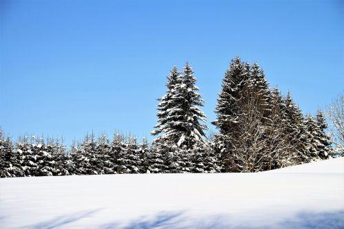 žiema,medžiai,sniegas,kraštovaizdis,žiemą,šaltas,šaltis,ledinis,gamta,mėlynas dangus,saulė,saulėta diena,žiemos laikas,snieguotas,žiemos svajonė,spalvingas,ledinis šaltas,ledinis,sušaldyta,pasakų miškas,daug sniego,Adventas,Kalėdos