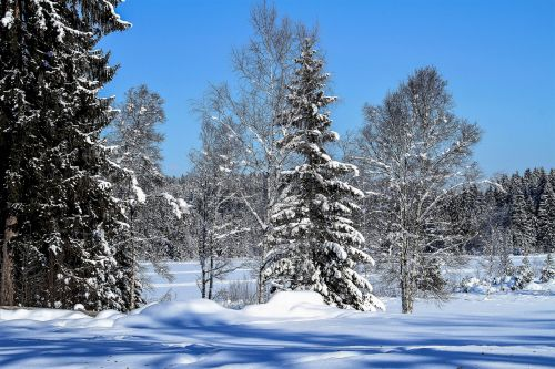 žiema,medžiai,sniegas,kraštovaizdis,žiemą,šaltas,šaltis,ledinis,gamta,mėlynas dangus,saulė,saulėta diena,žiemos laikas,snieguotas,žiemos svajonė,spalvingas,ledinis šaltas,ledinis,sušaldyta,pasakų miškas,Adventas,Kalėdos