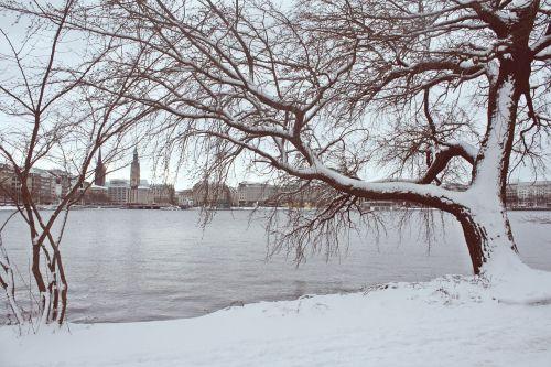 žiema, sniegas, medis, šaltas, šaltis, Alster, hamburgensien, hamburgas, Hanzos miestas Hamburgas, juoda ir balta fotografija, be honoraro mokesčio