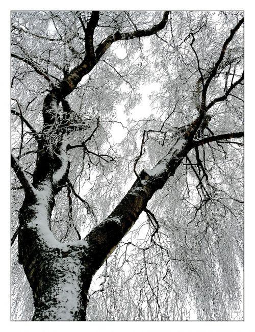 žiema,šaltis,sniegas,ledas,šaltas,ledinis,žiemos magija,auskaras,sušaldyta,žiemą,gamta,medis,filialas,snieguotas,žiemos svajonė,medžių kamienus,žiemos nuotaika,žiemos miškas,žiemos diena