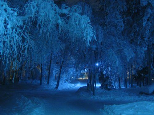 žiema,naktis,mėlynas,atspalvis,medžiai,sniegas padengtas,šaltas,snieguotas,medis,padengtas,lempa