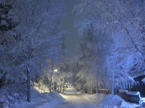 žiema,sniegas,šaltis,medžiai,mėlynas atspalvis,sniegas padengtas,šaltas,snieguotas,medis,padengtas,gatvės lempa,finland,naktis,snieguotas kelias,lempos spindesys,žiemos magija